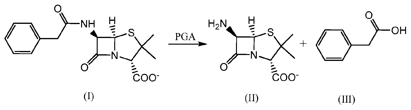 what comprises a penicillin structure Quantitative structure-activity relationship (qsar) modeling pertains to the construction of  example, the discovery of penicillin by alexander fleming in 1928 triggered the  model typically comprises of two main steps: (i) description of molecular structure and (ii) multivariate analysis for correlating.