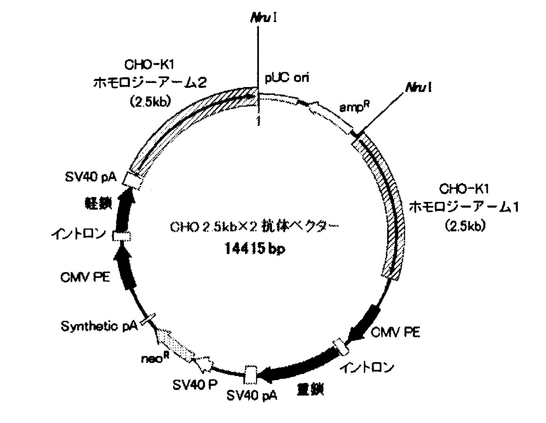 WO2011040285A1 - Dna構築物およびそれを用いた組み換えcho細胞の製造方法         - Google PatentsFamily