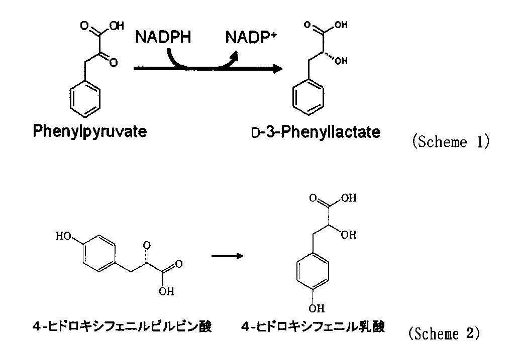 フェニルピルビン酸 - Phenylpyr...