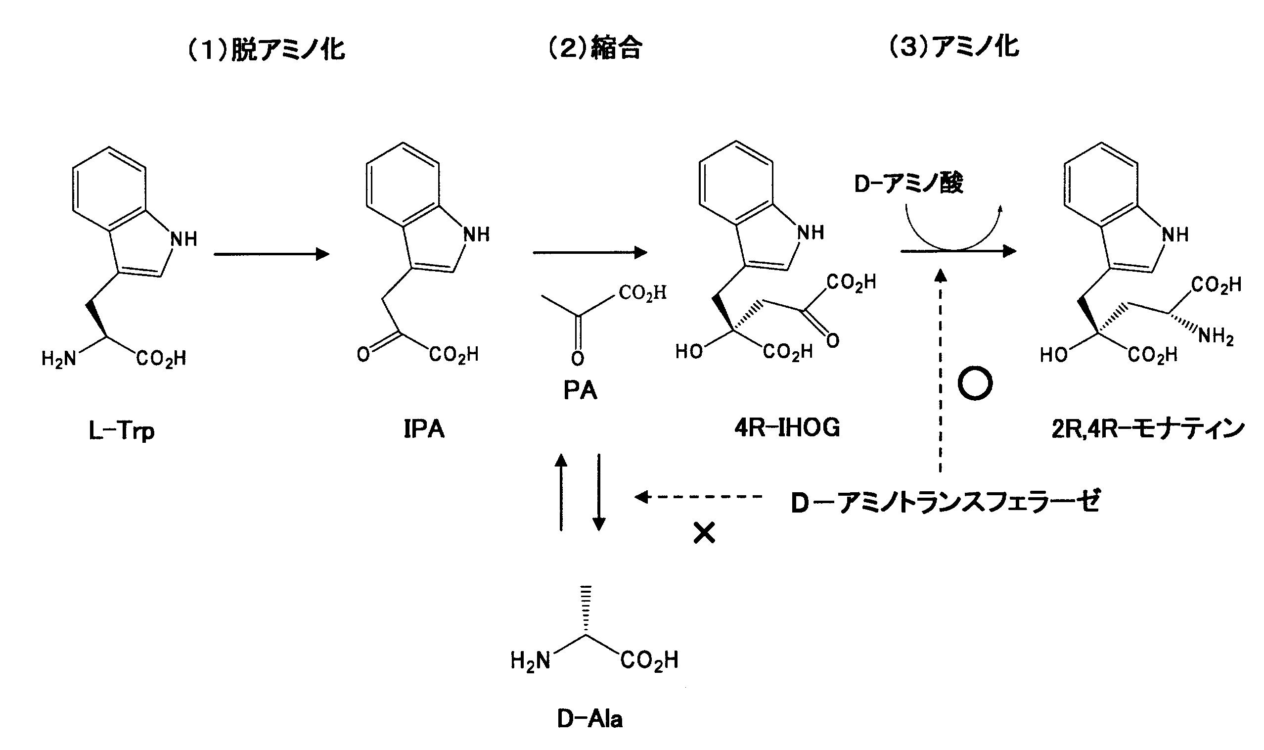 Patent WO2012147674A1 - モナテ...