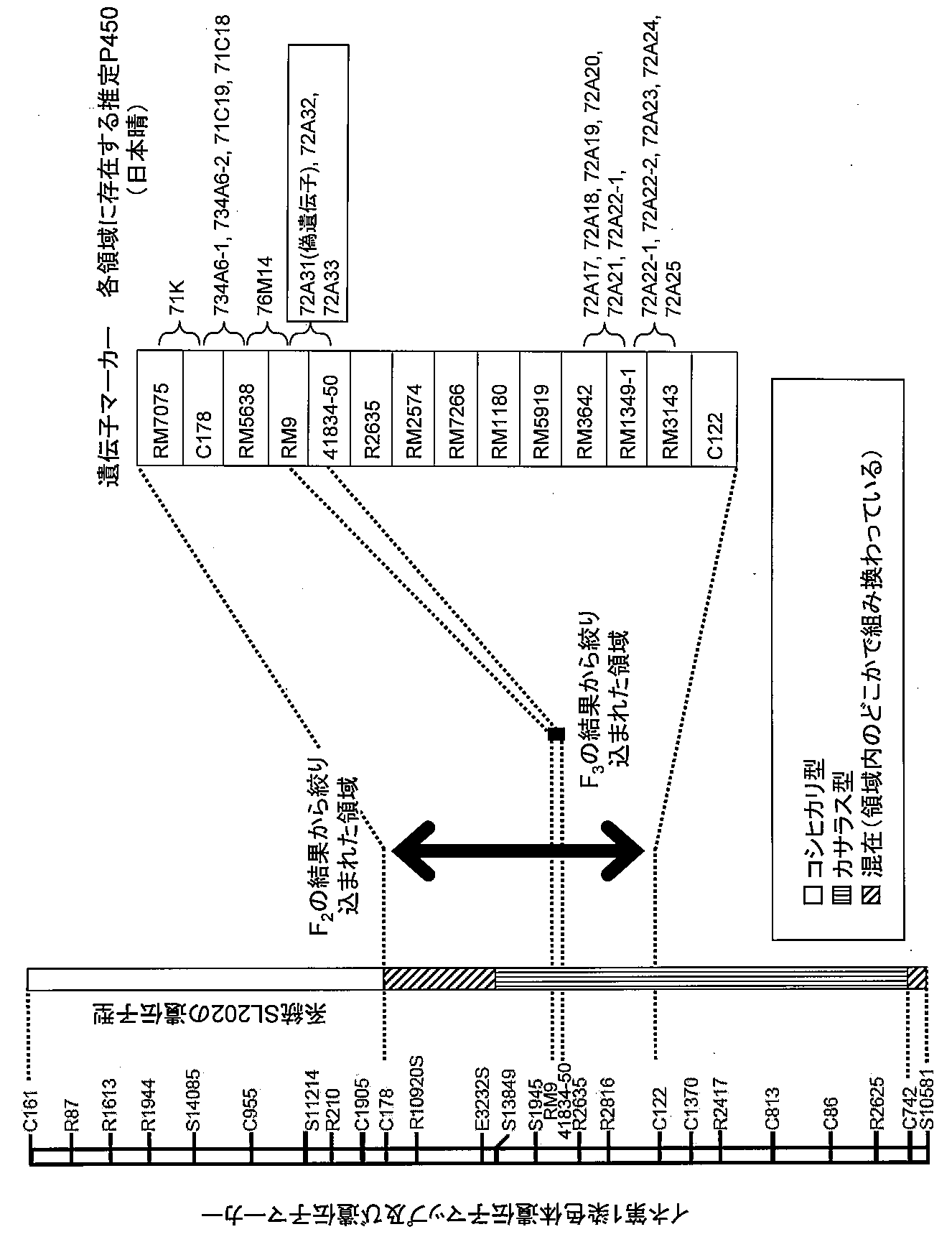 Patent WO2013054890A1 - チトク...
