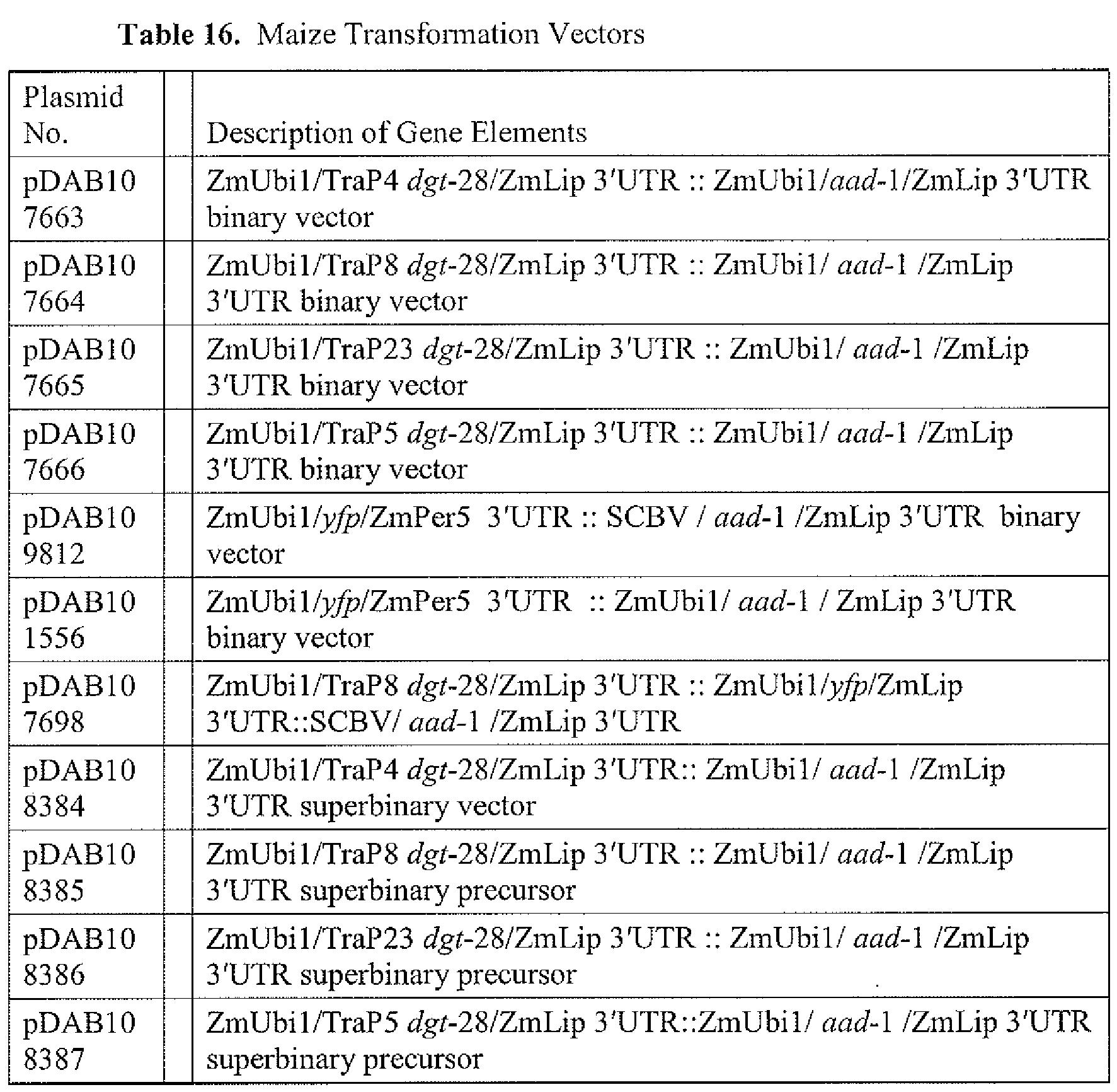 marketsworld binary options review