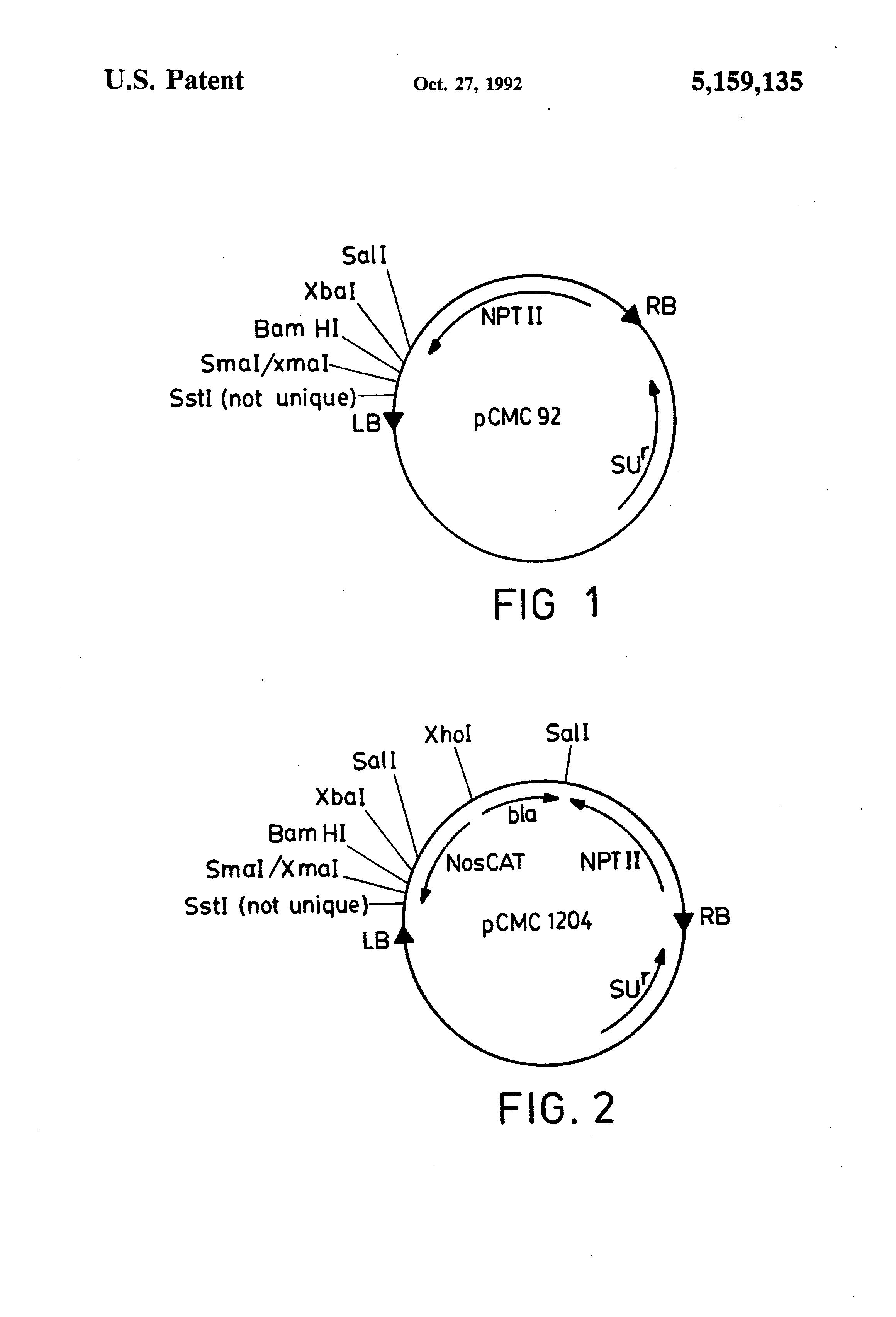 patent us5159135