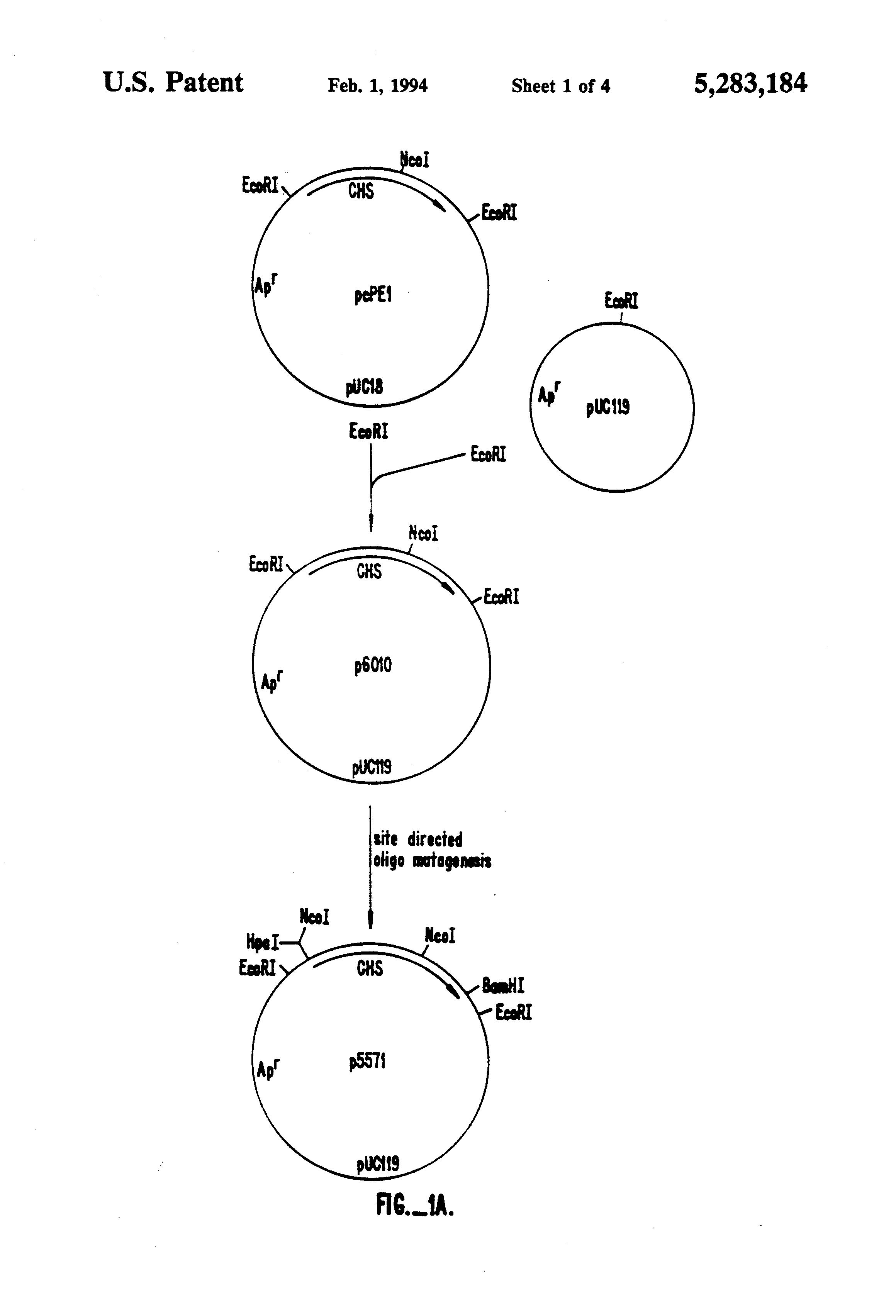 patent us5283184