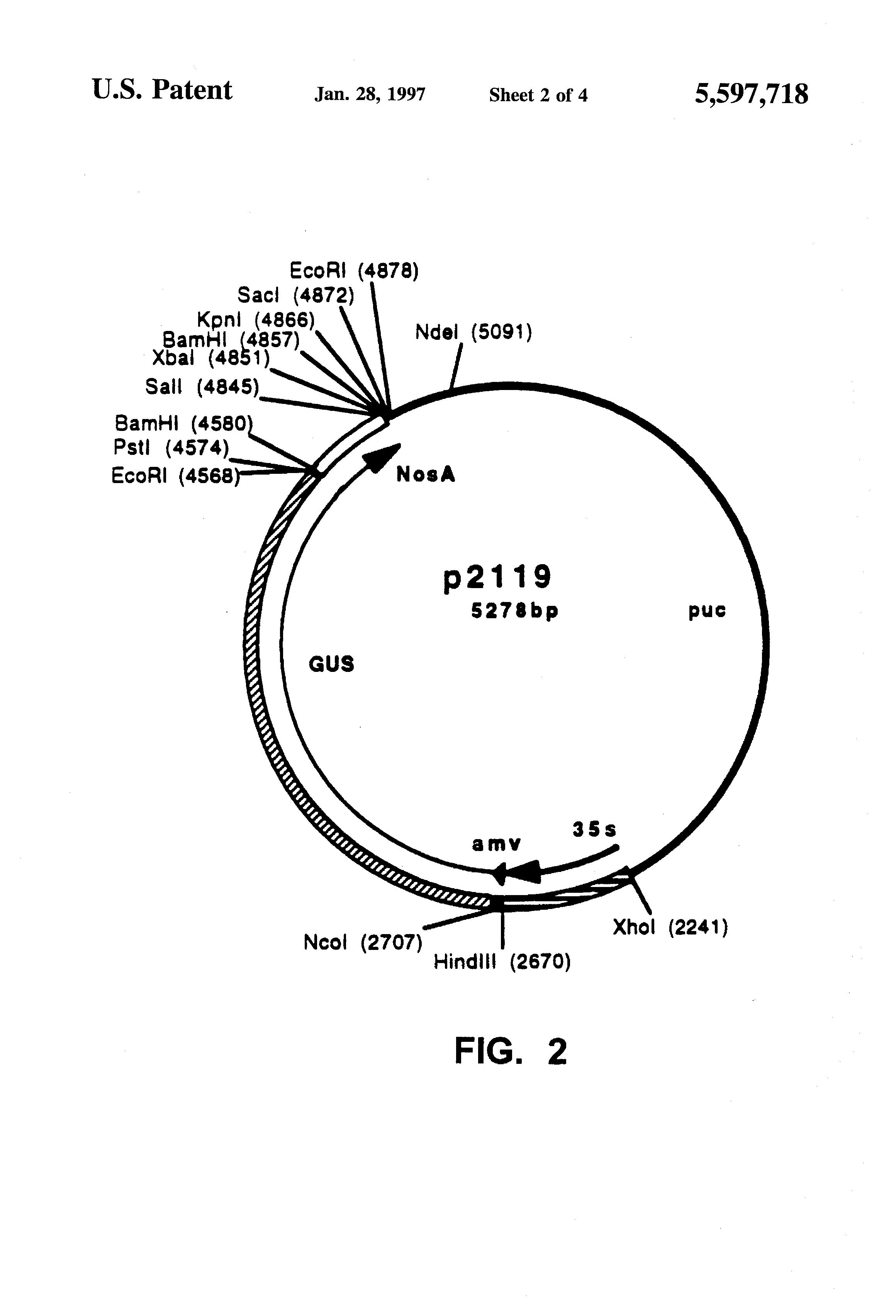 patent us5597718