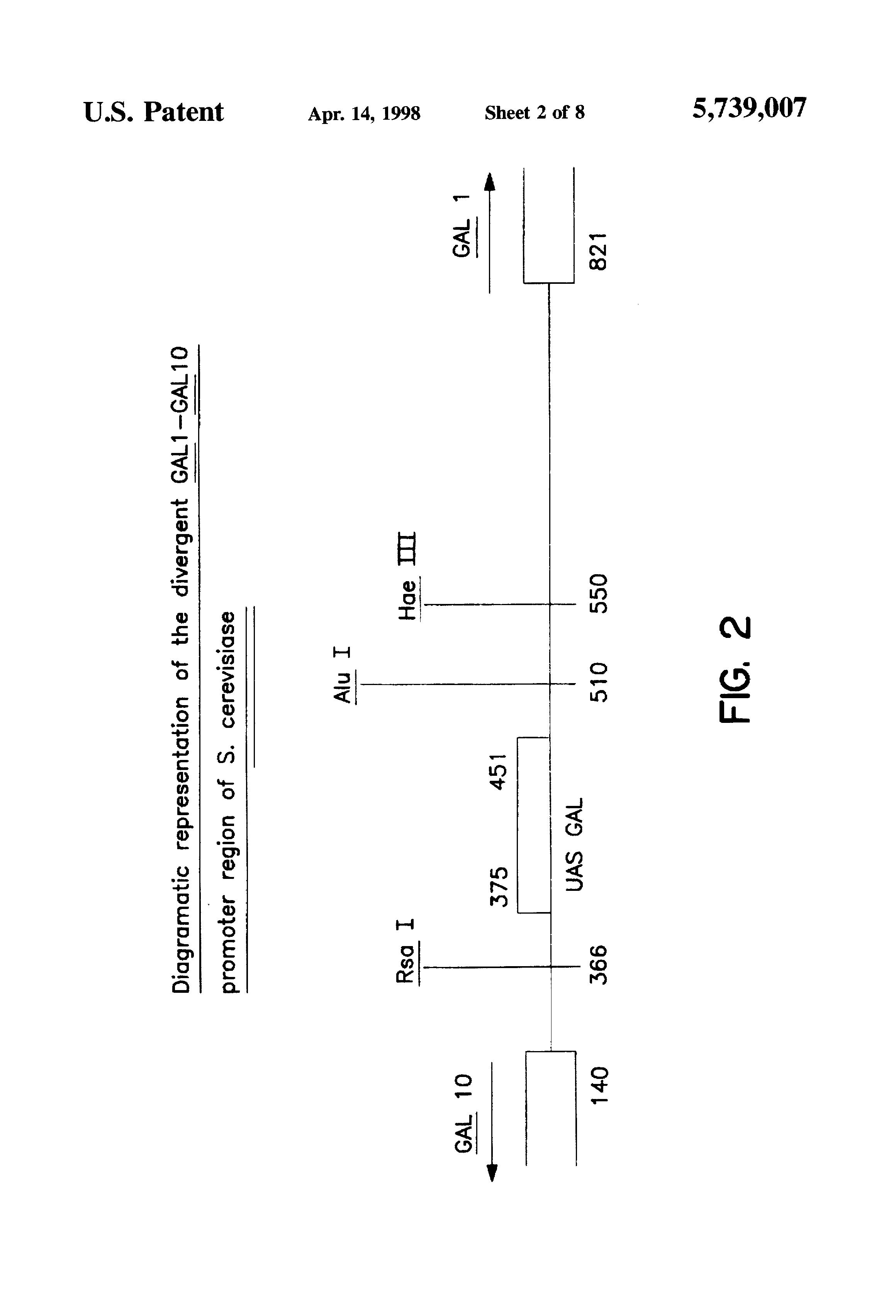 Patent Us5739007 Hybrid Gal10 Pgk Yeast Promoter Google Patents Buy 3 Get 1 Free Galten Drawing