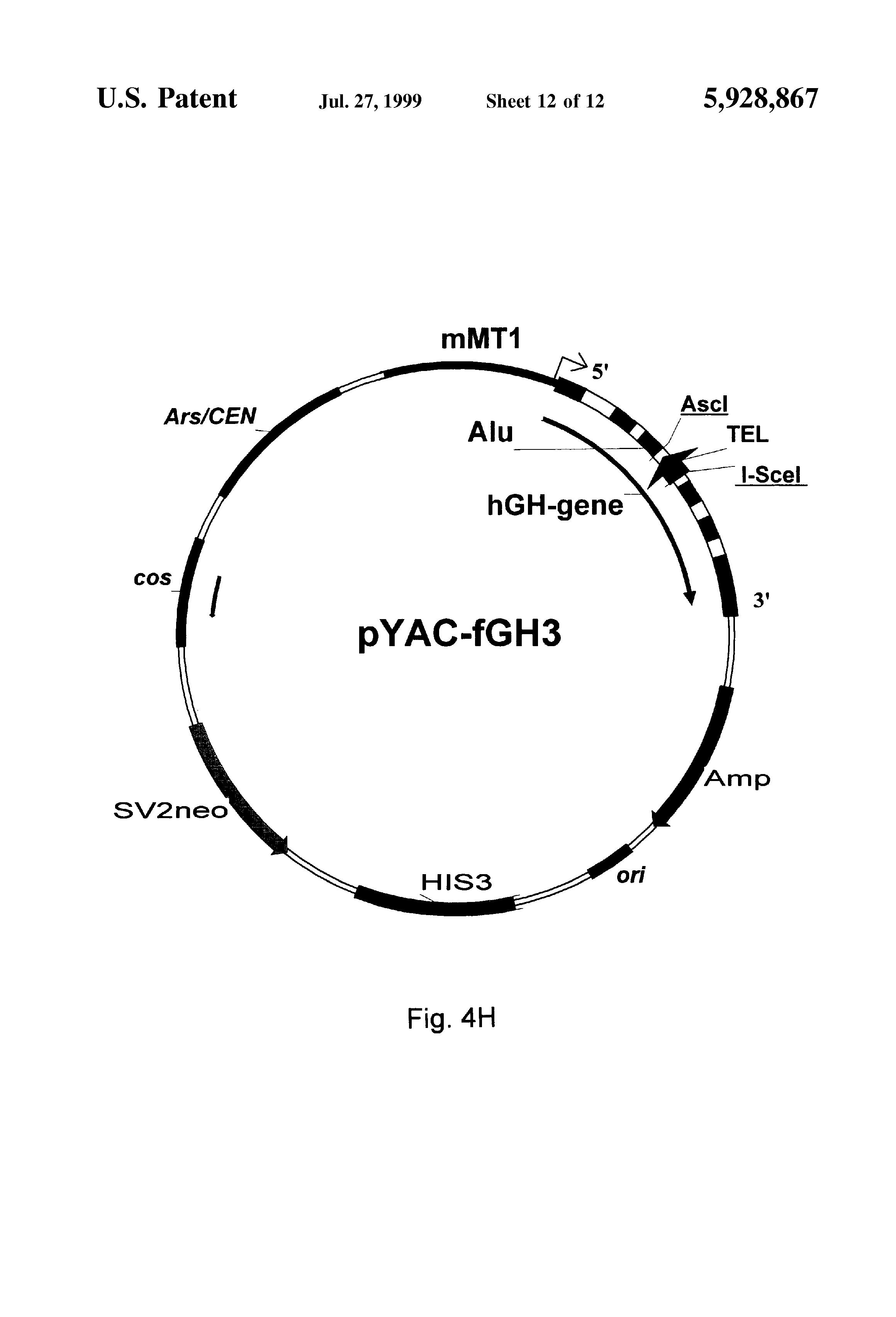patent us5928867