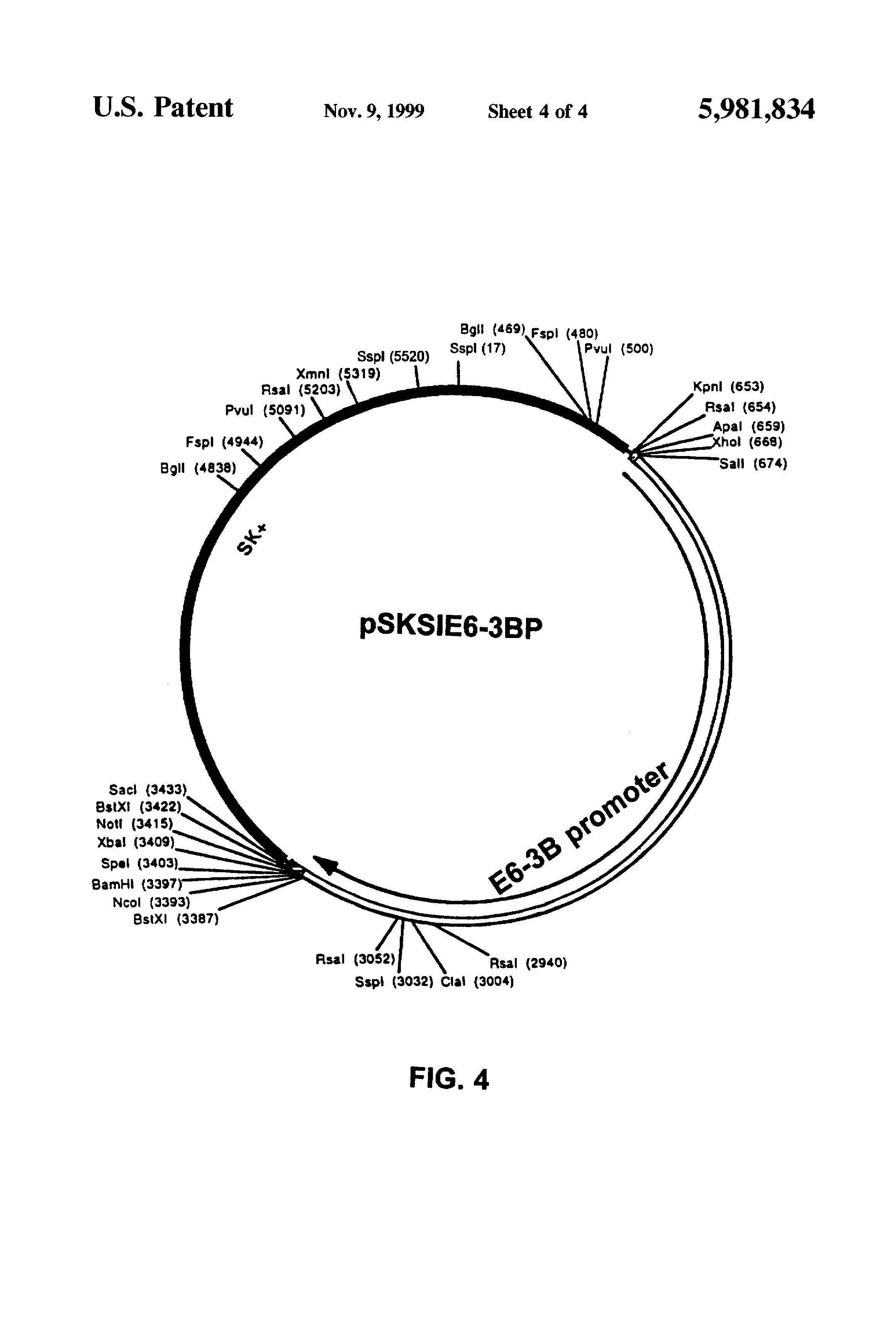 patent us5981834