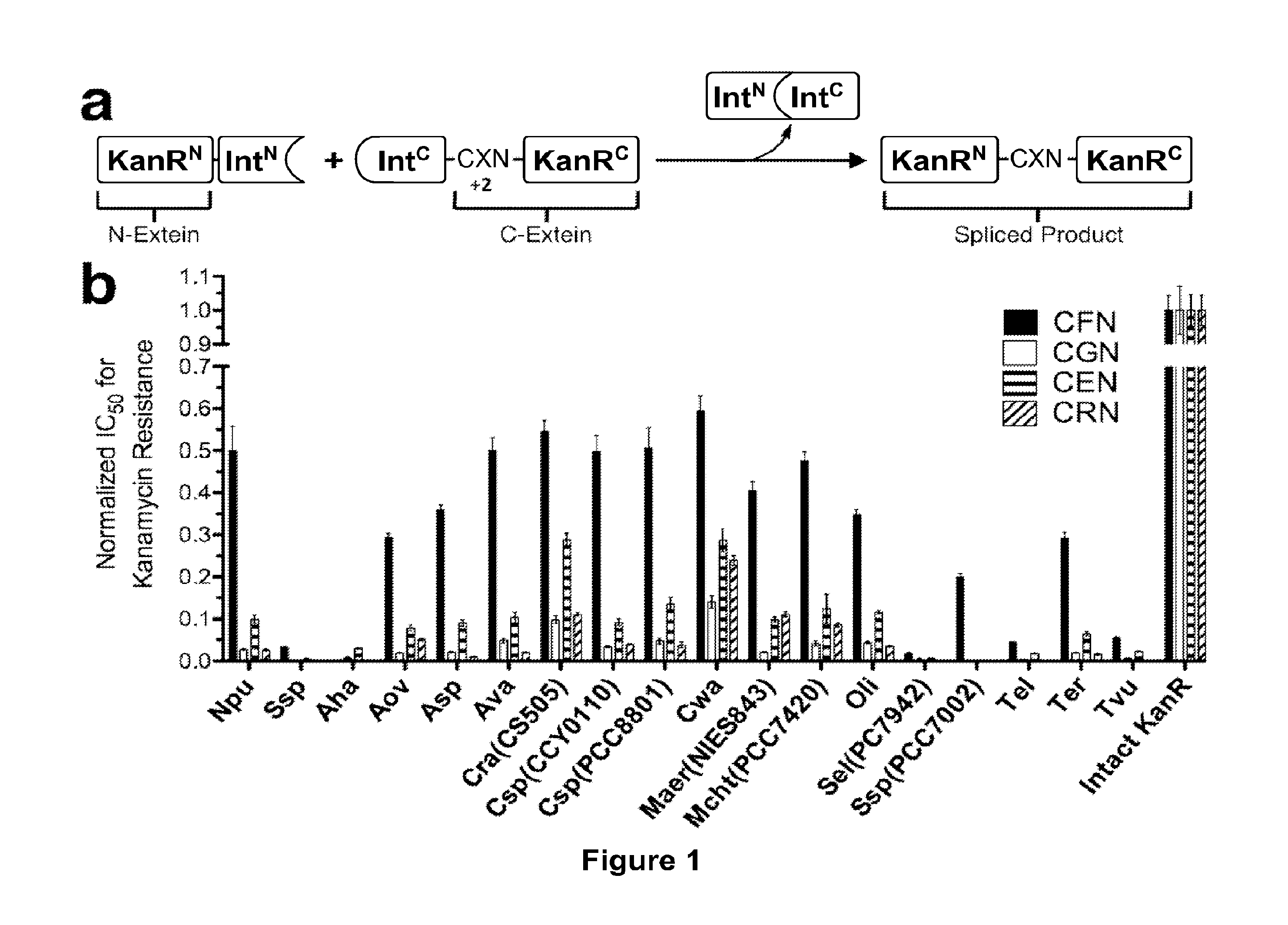 US20150344549A1 - Split inteins, conjugates and uses thereof