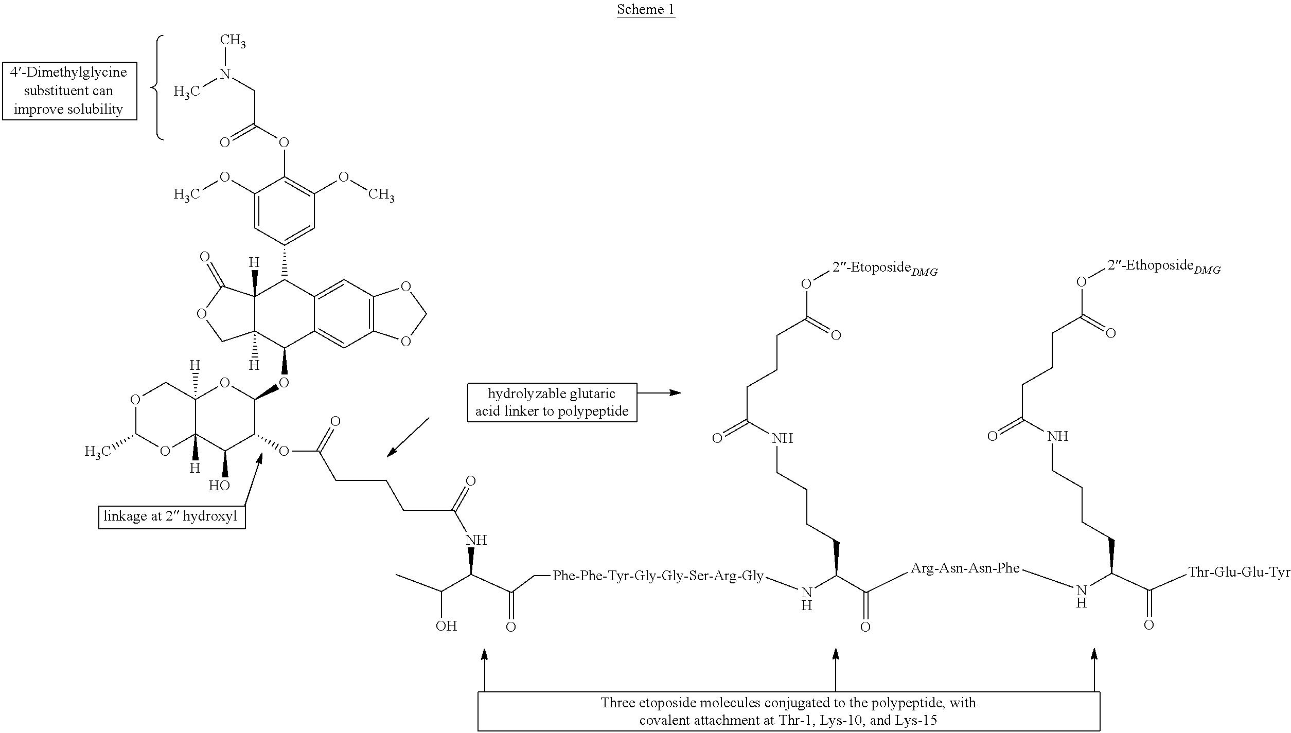 US A1 Etoposide and doxorubicin conjugates for