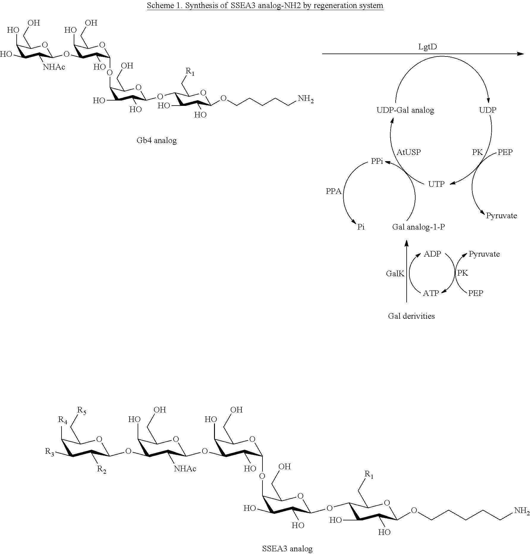 Figure US10342858-20190709-C00015