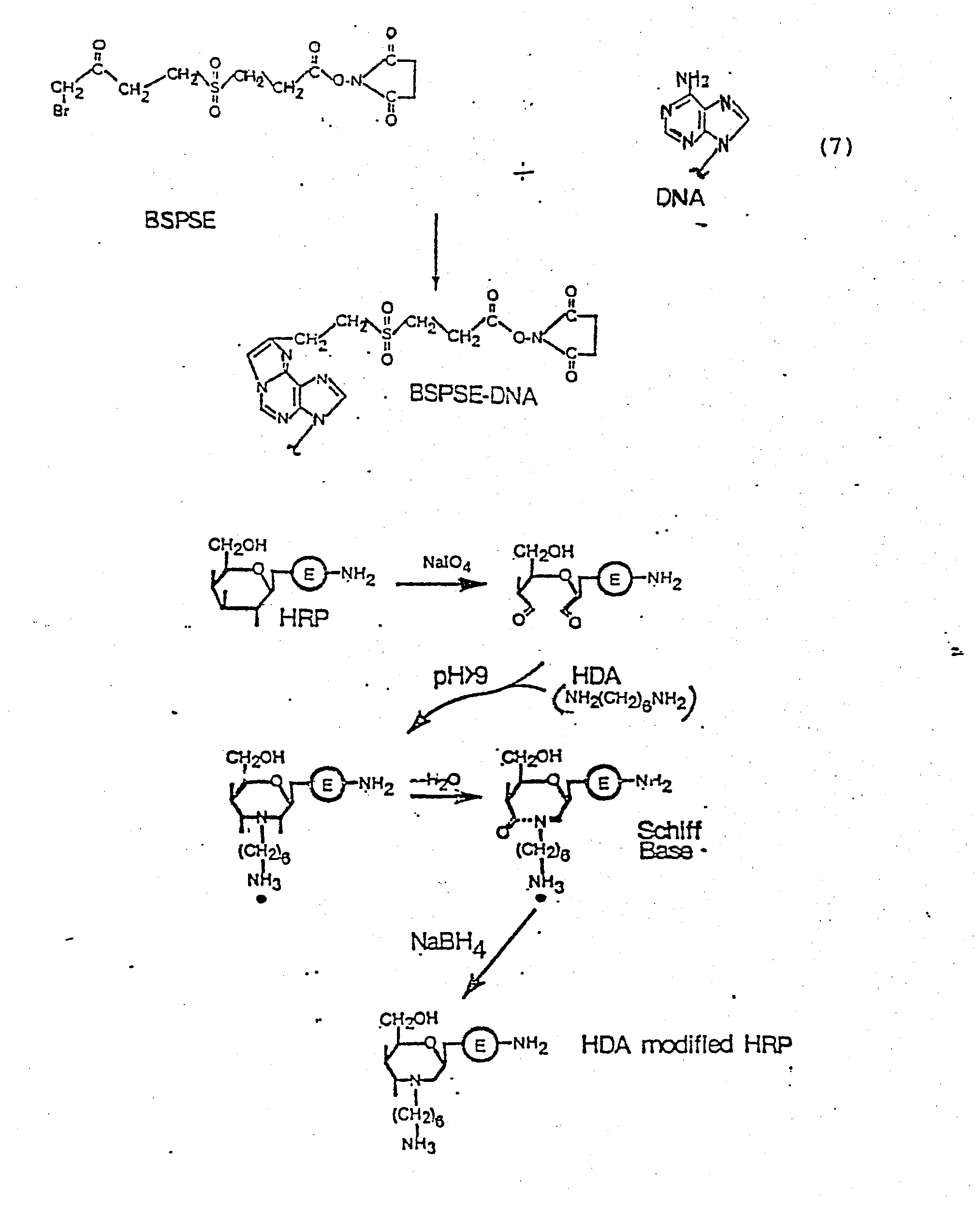 Nonisotopic Dna Probe Techniques 2001 Datsun Frontier Xe Passenger Fuse Box Diagram Array Ep0138357a2 Labeled Google Patents Rh Com