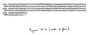 EP1523992A1 - Vaccine formulation against Gumboro disease
