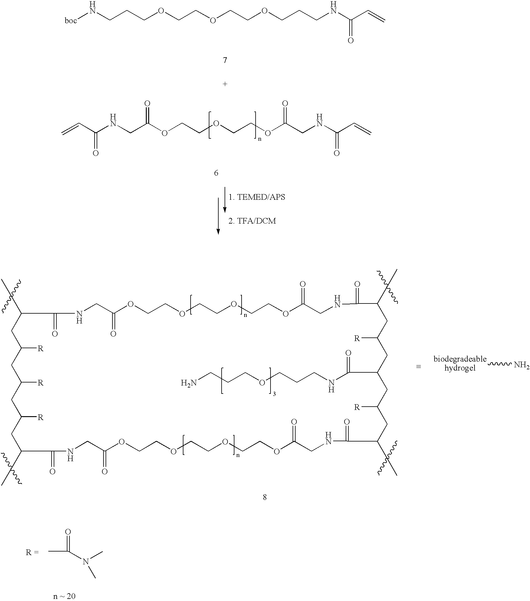 Figure US20060002890A1-20060105-C00006