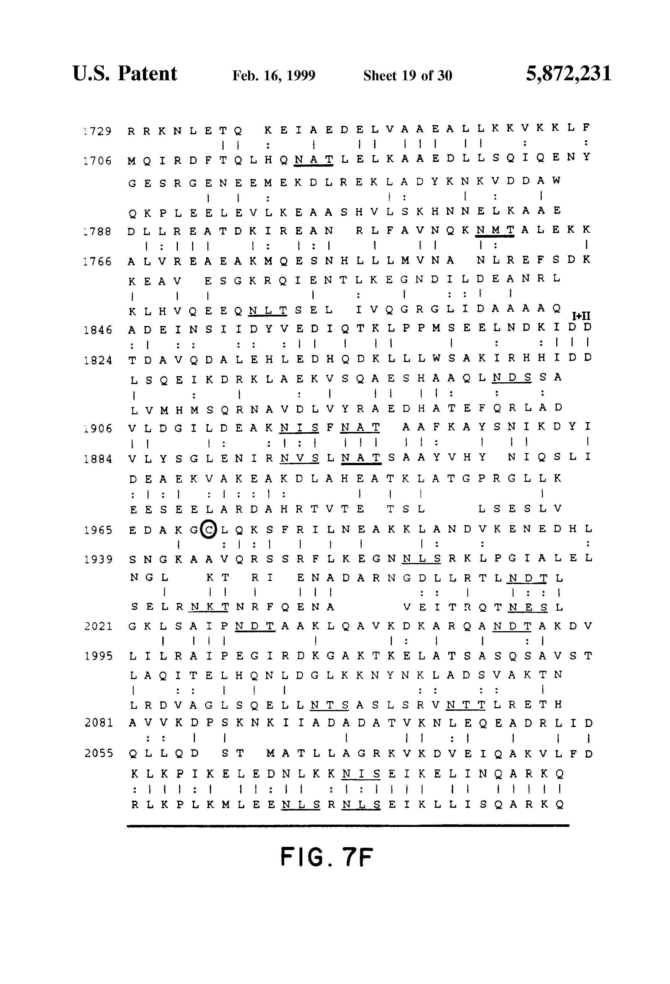 US5872231A - Nucleic acids encoding merosin - Google Patents