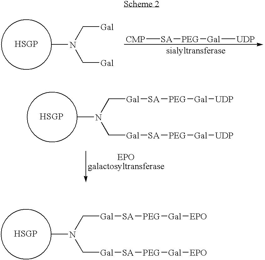 Figure US07795210-20100914-C00016