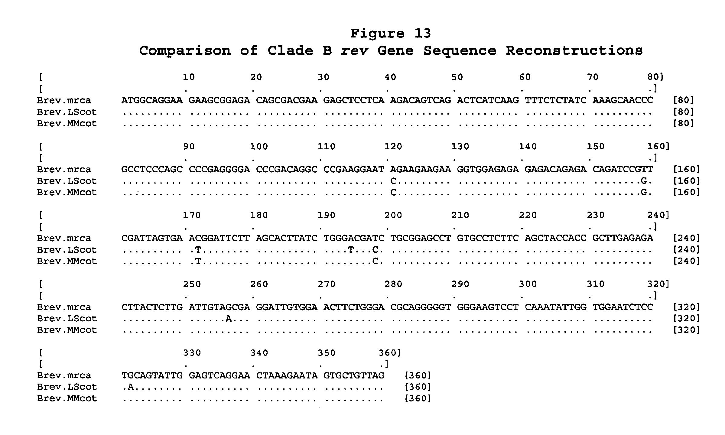 US20050137387A1 - Ancestral and COT viral sequences