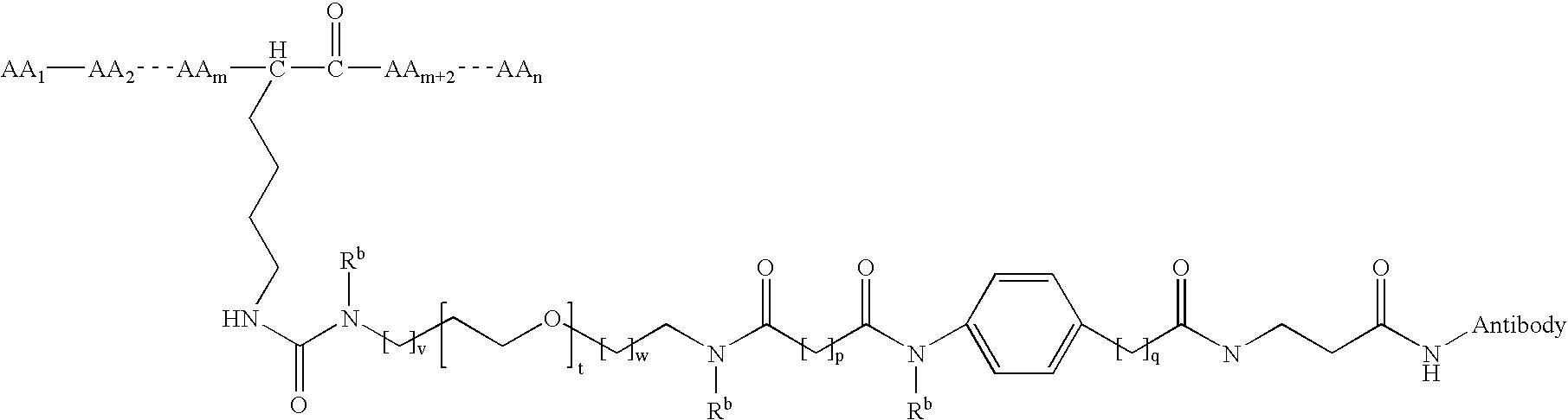 Figure US20080152660A1-20080626-C00224
