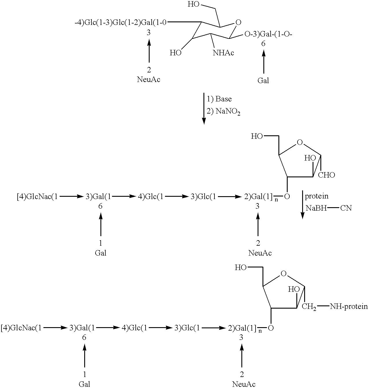Figure US06284884-20010904-C00007