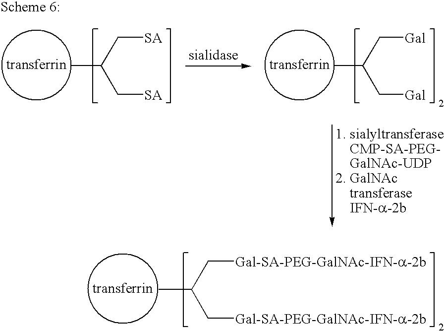 Figure US20080242607A1-20081002-C00056
