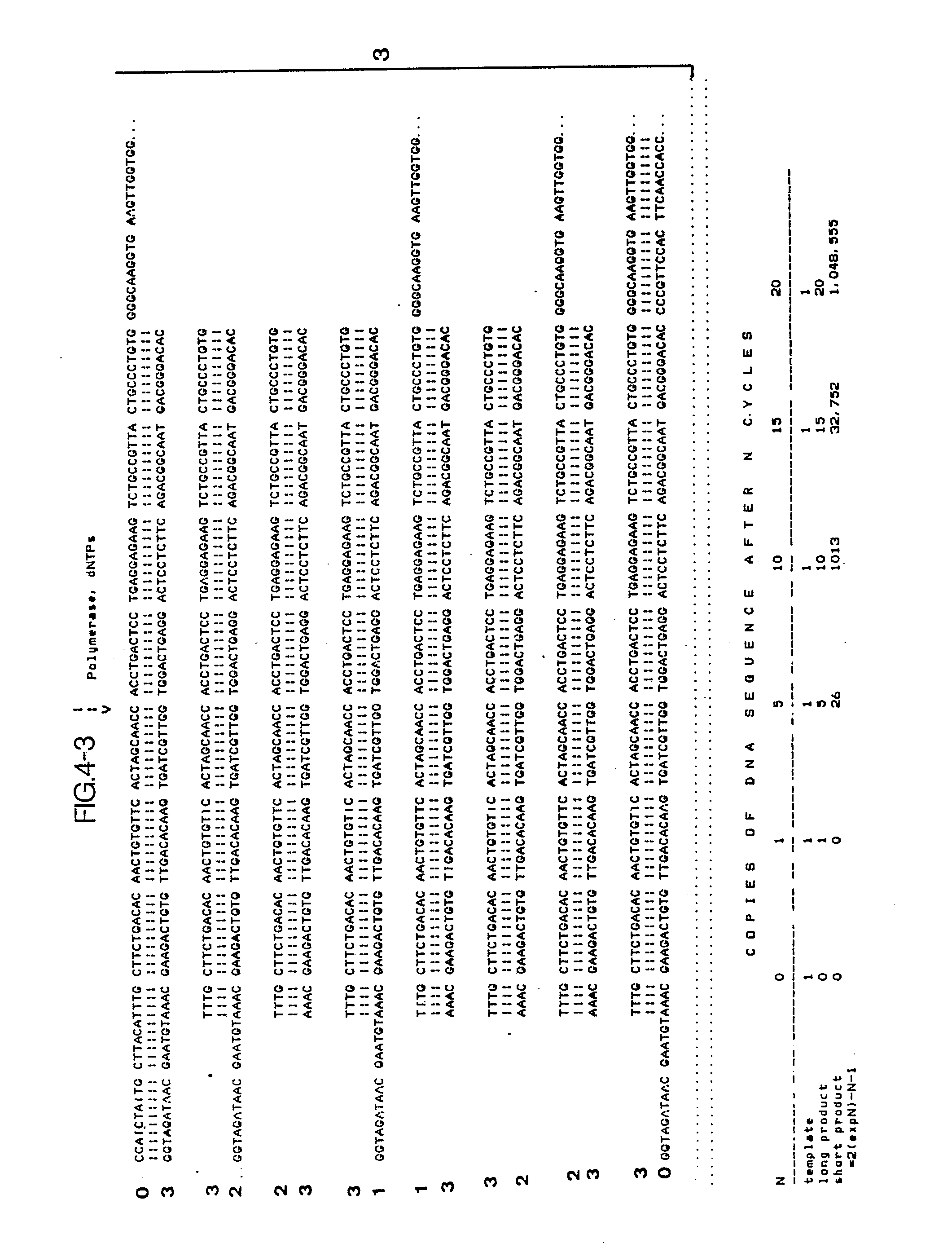 Ep0201184a2 Process For Amplifying Nucleic Acid Sequences Google Argo Wiring Diagram 3p Arm Patents