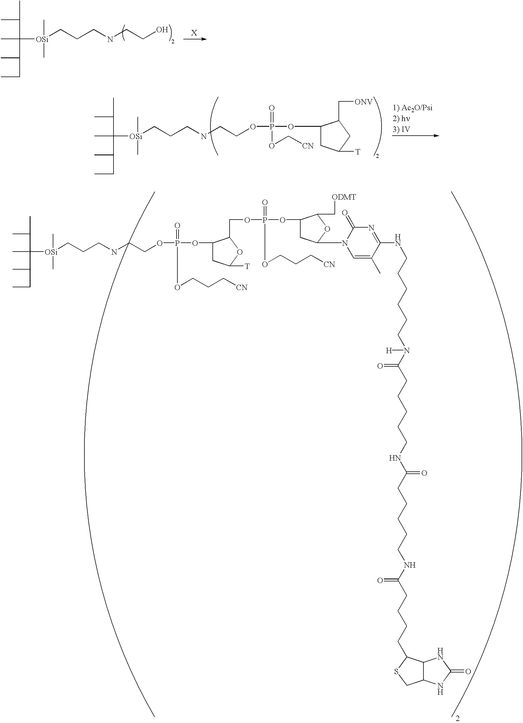 Figure US20050053928A9-20050310-C00016