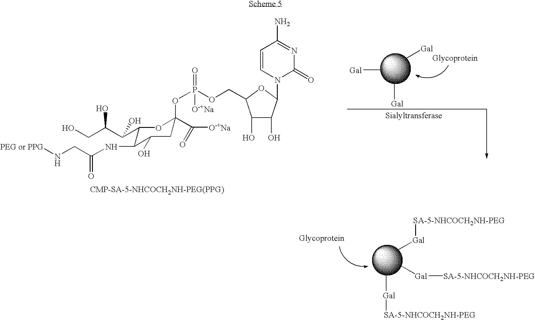 Figure US07932364-20110426-C00019