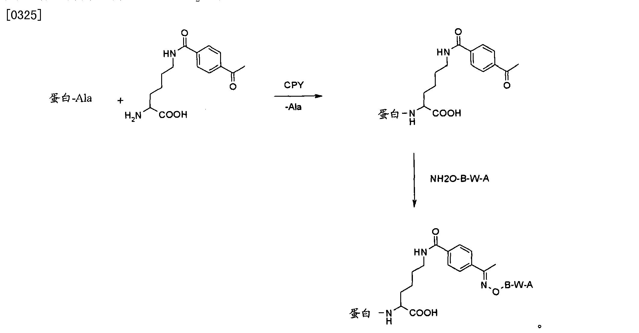 Figure CN102112157BD00481