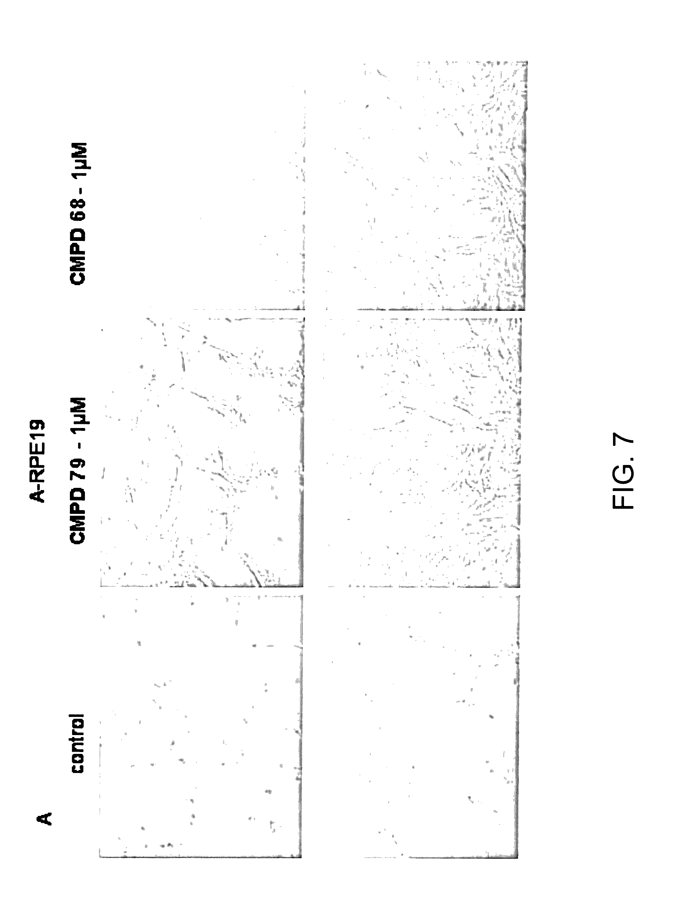 US9670138B2 - Telomerase activating compounds and methods of