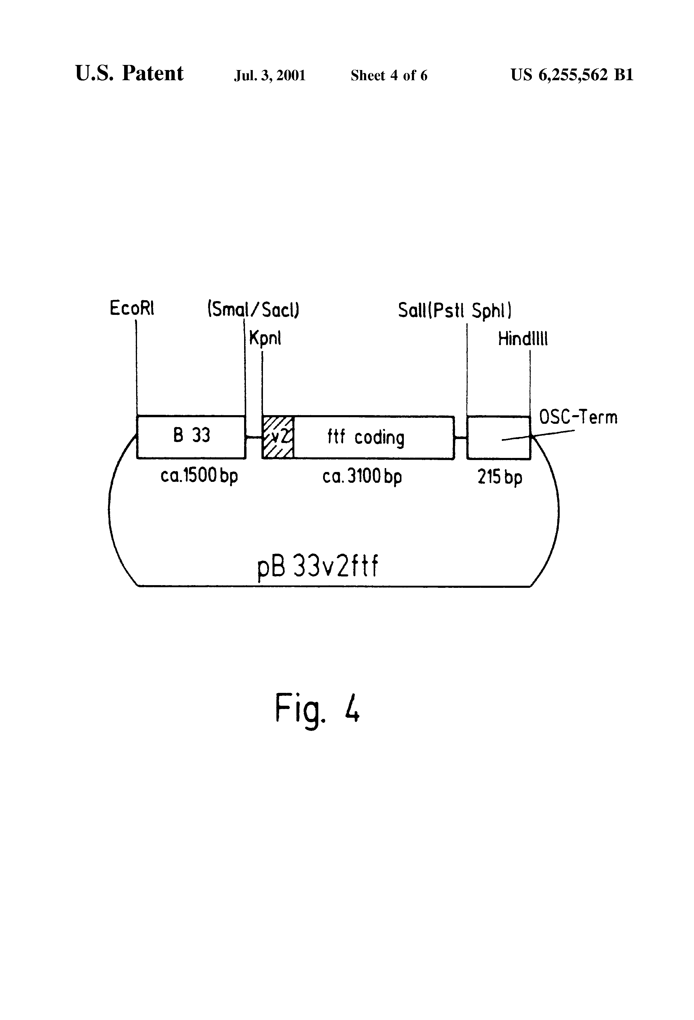Us6255562b1 Process For Producing Transgenic Inulin