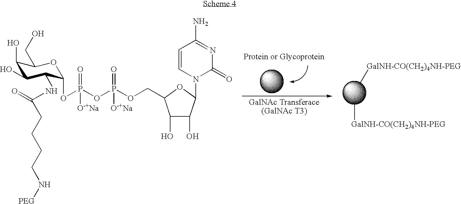 Figure US20080300173A1-20081204-C00063