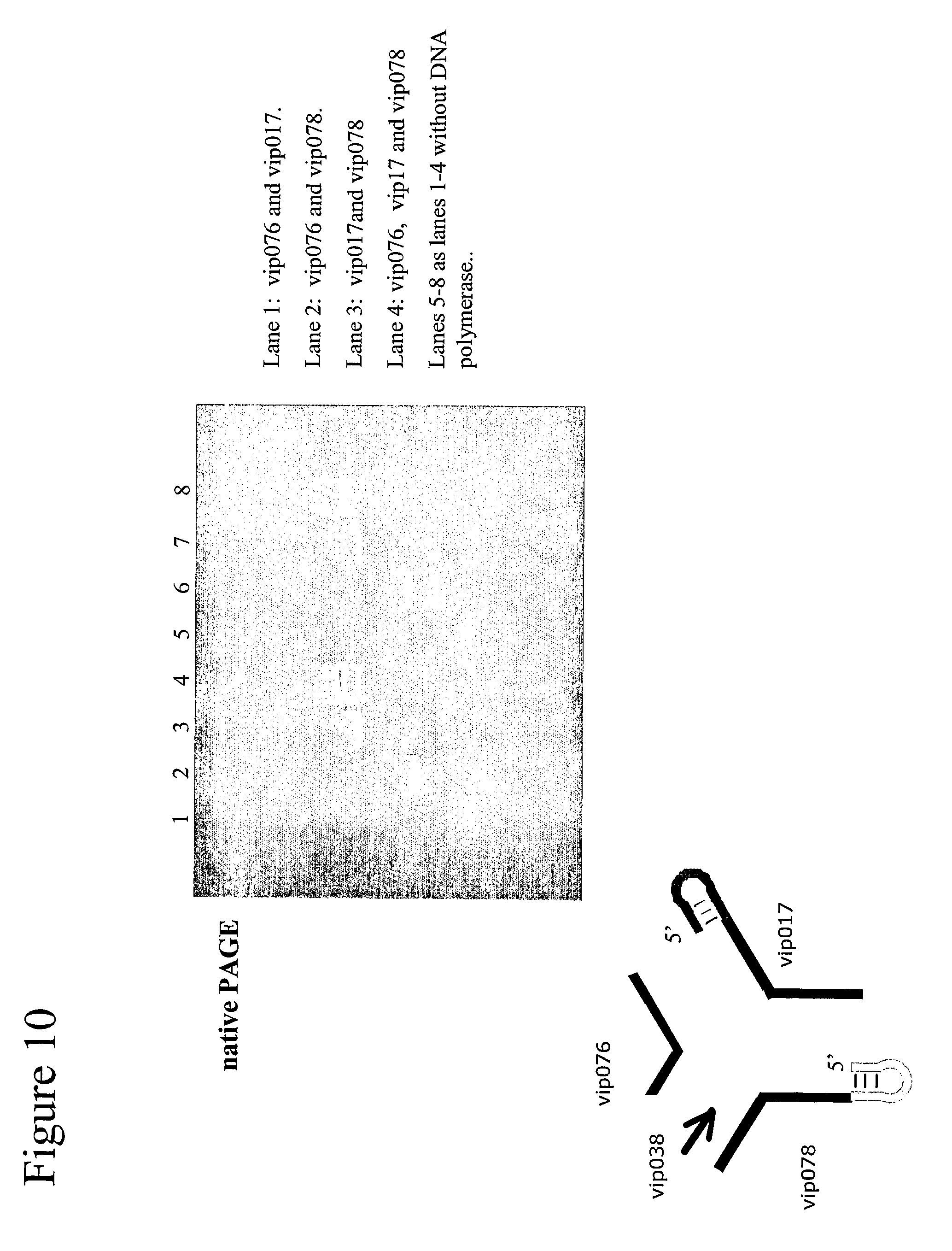 US8202823B2 - Structural nucleic acid guided chemical