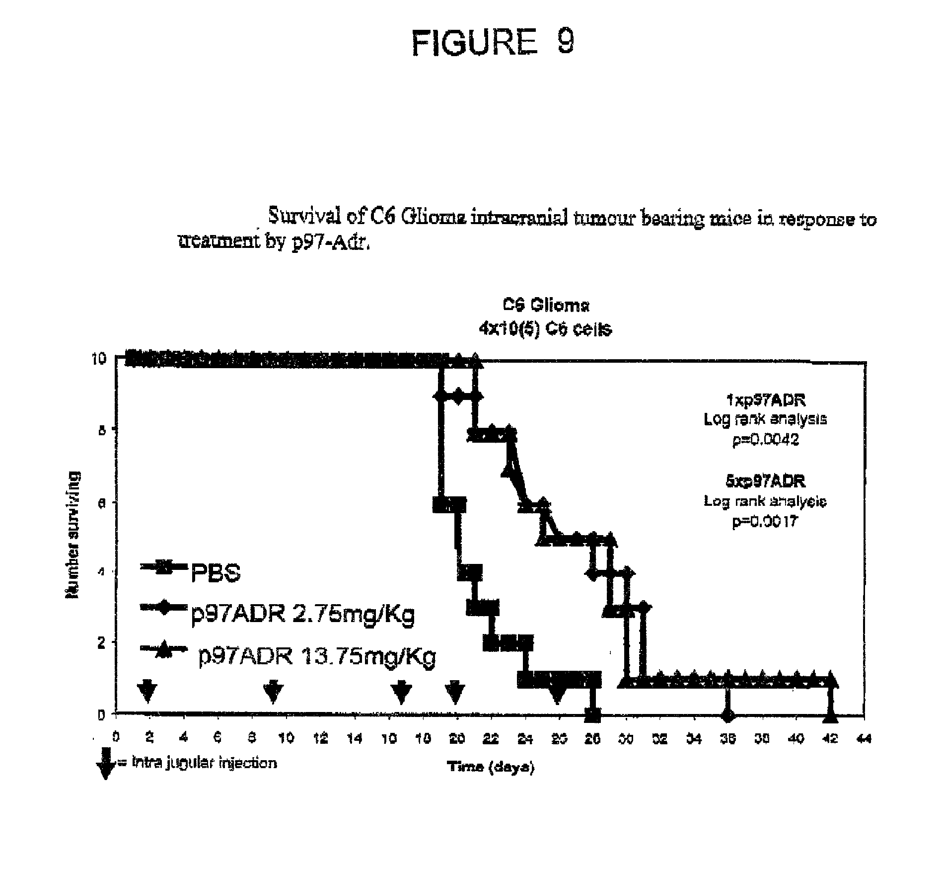 US20020119095A1 - Chemotherapeutic agents conjugated to p97