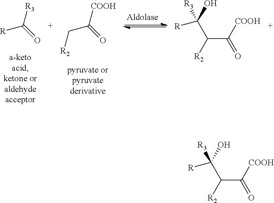 US9719079B2 - Aldolases, nucleic acids encoding them and