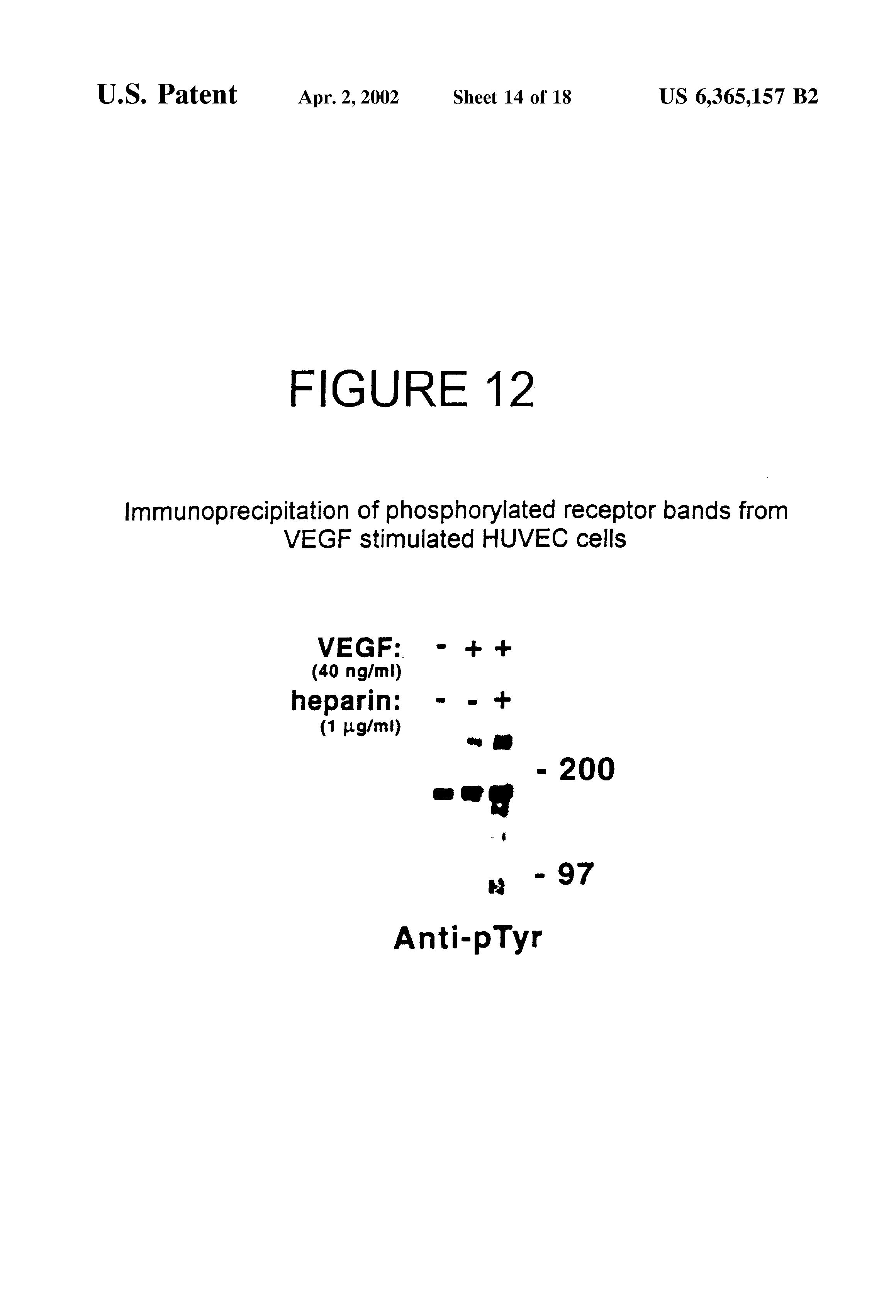 US6365157B2 - Monoclonal antibodies specific to VEGF