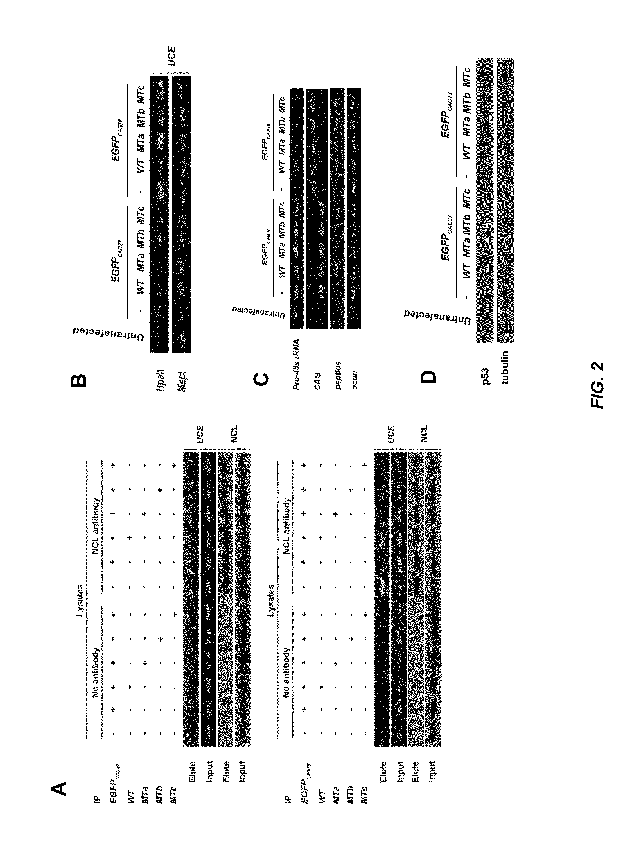 US9297798B2 - Therapeutic approach for polyglutamine