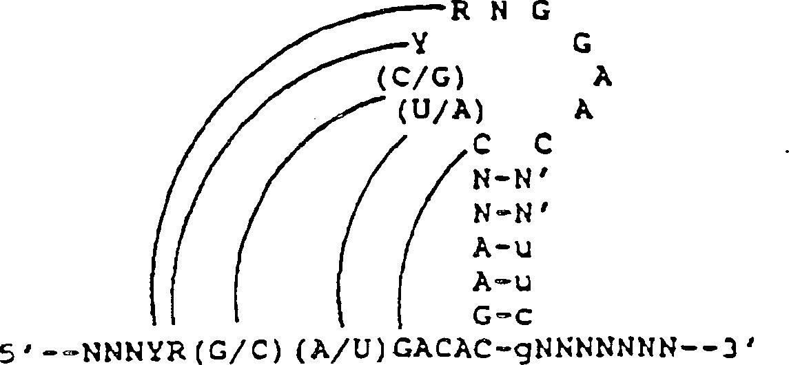 stimulation des g punktes