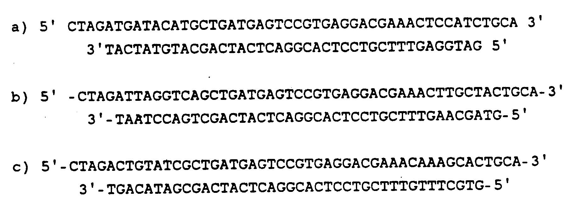 EP0416572B1 - RNA mit Endoribonucleaseaktivität gegen mRNA von ...