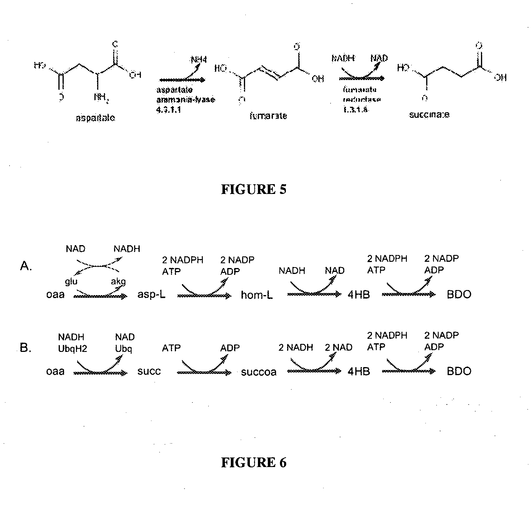 EP2137315B1 - Compositions and methods for the biosynthesis