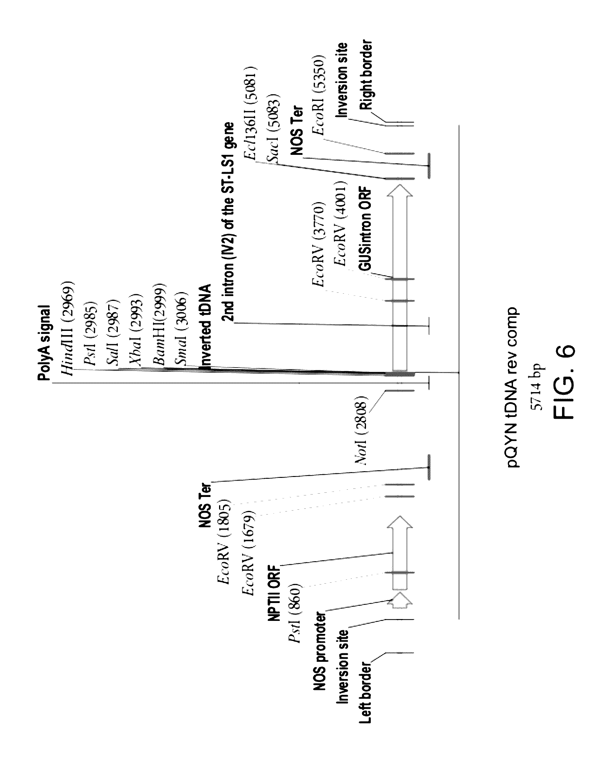 US9493785B2 - Isolated polynucleotides and polypeptides and