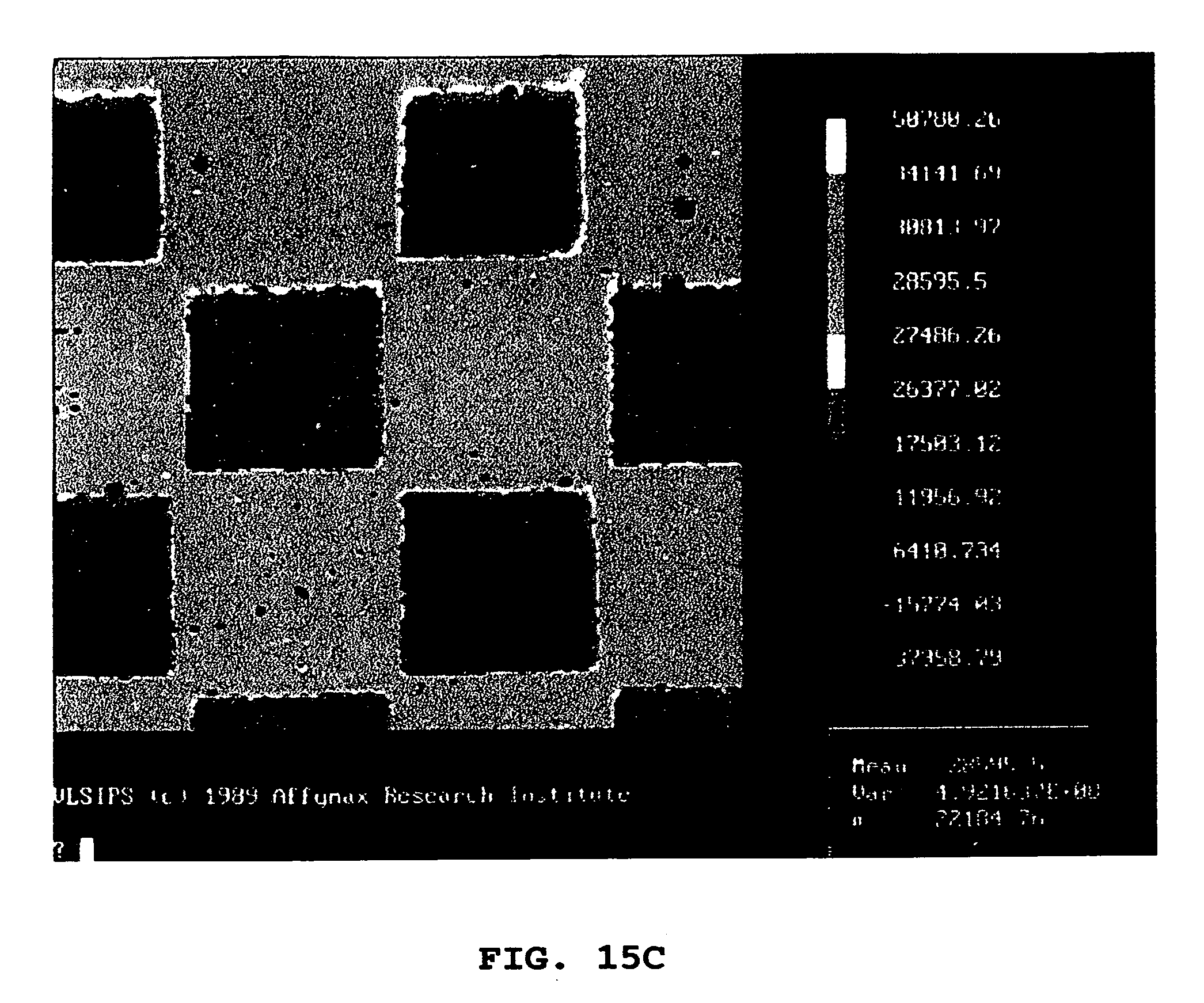 Us20050148027a1 Very Large Scale Immobilized Polymer