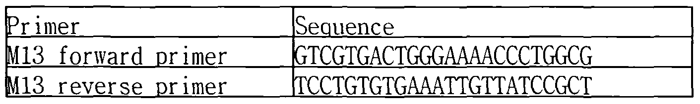 WO2009035303A2 - Bacteriophage or lytic protein derived from