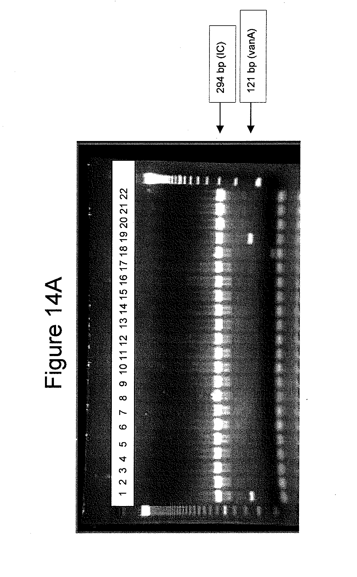 US20140127684A1 - Highly conserved genes and their use to