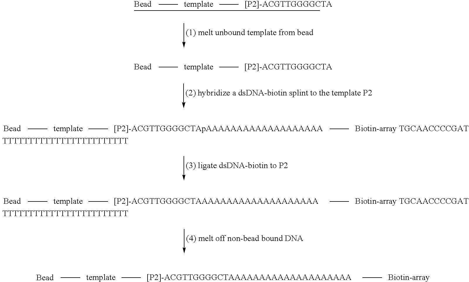 Figure US20090191553A1-20090730-C00001