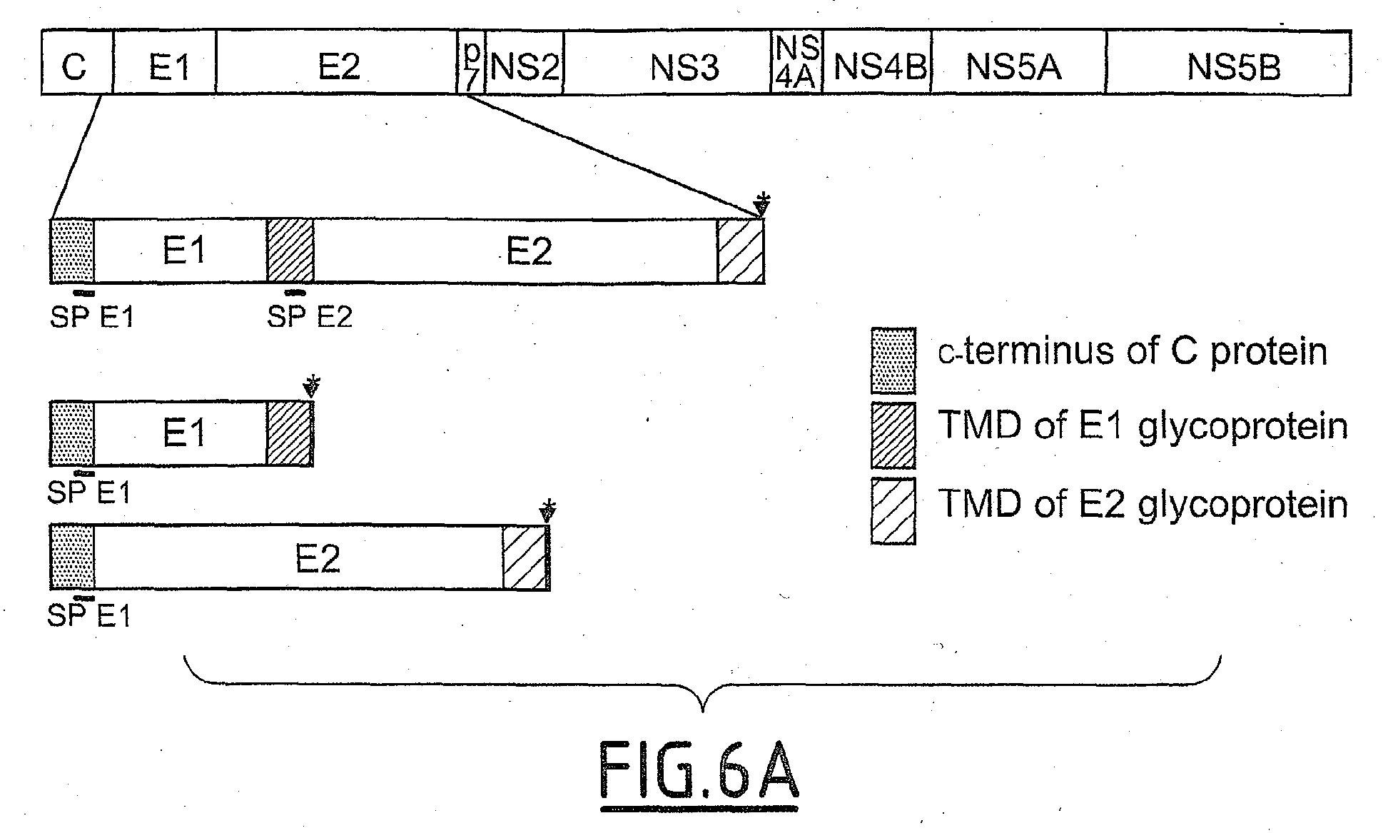 EP1454989A1 - Infectious HCV pseudo-particles containing native