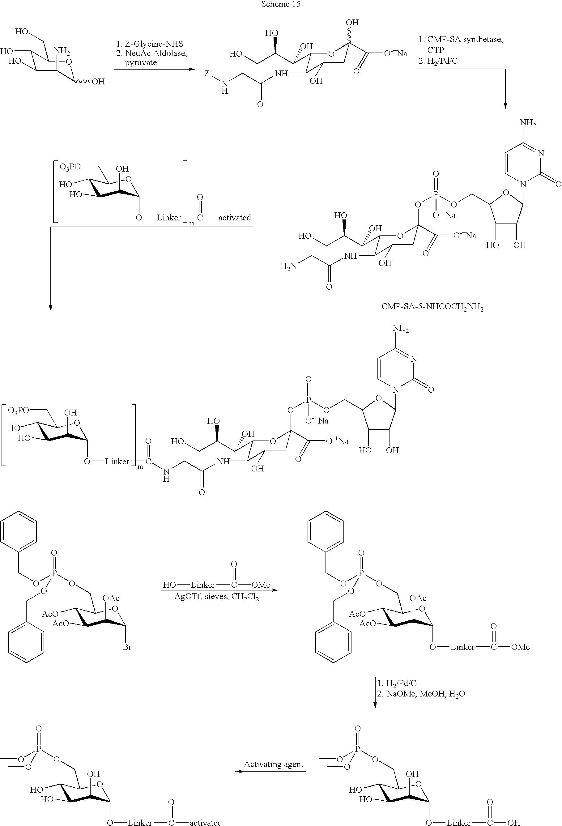 US B2 Remodeling and glycoconjugation of peptides Google