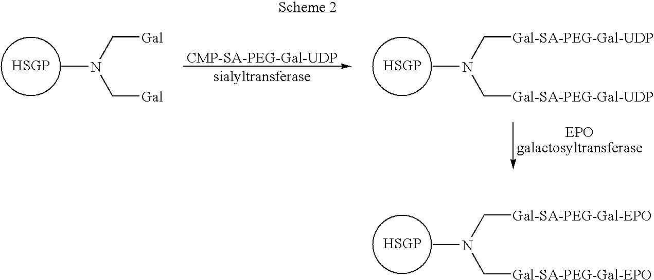 Figure US07439043-20081021-C00019