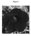 Uspp20121p3 Hibiscus Plant Named Panama Red Google Patents