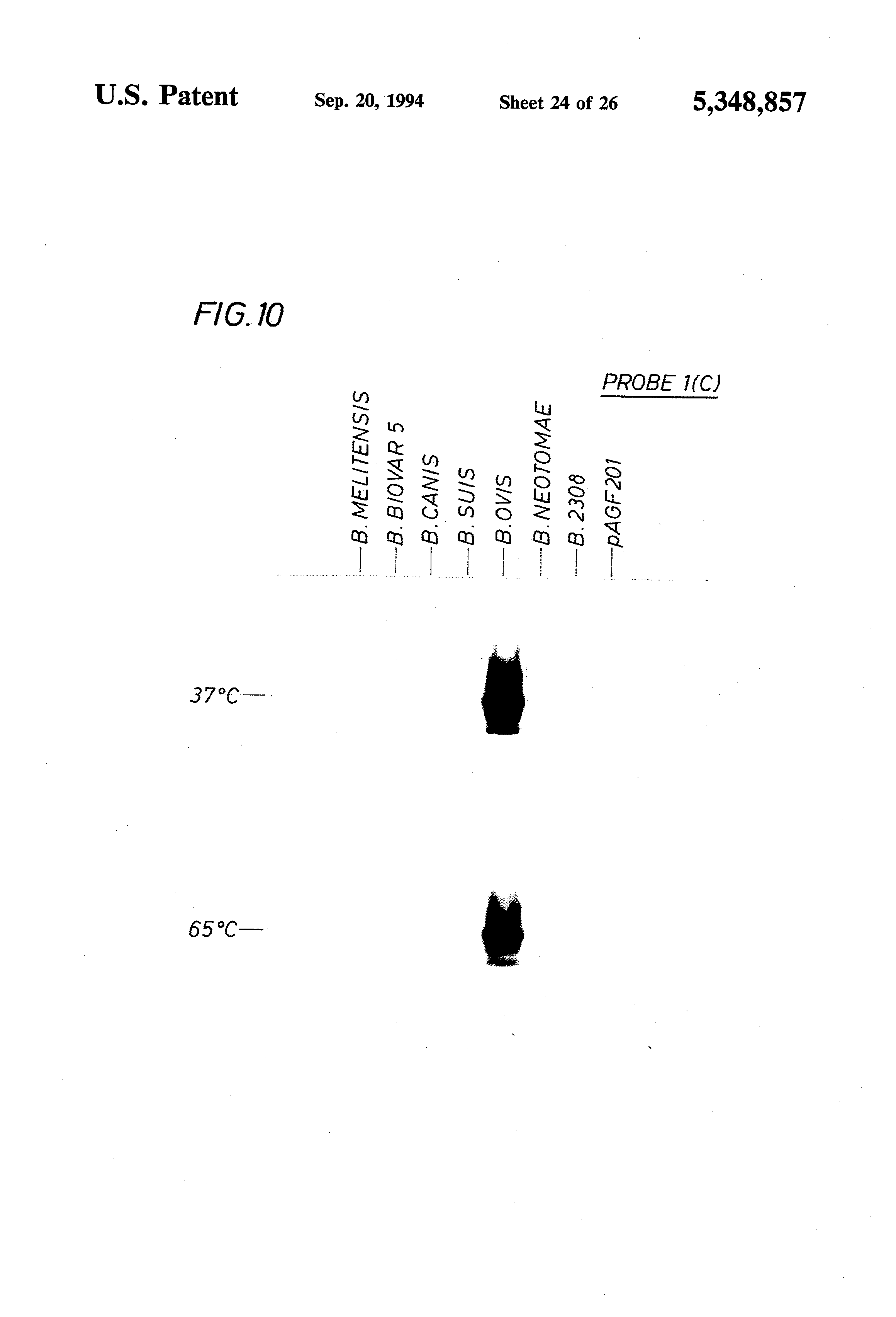 US5348857A - Probes and method for identifying species and biovars ... | 3408x2320