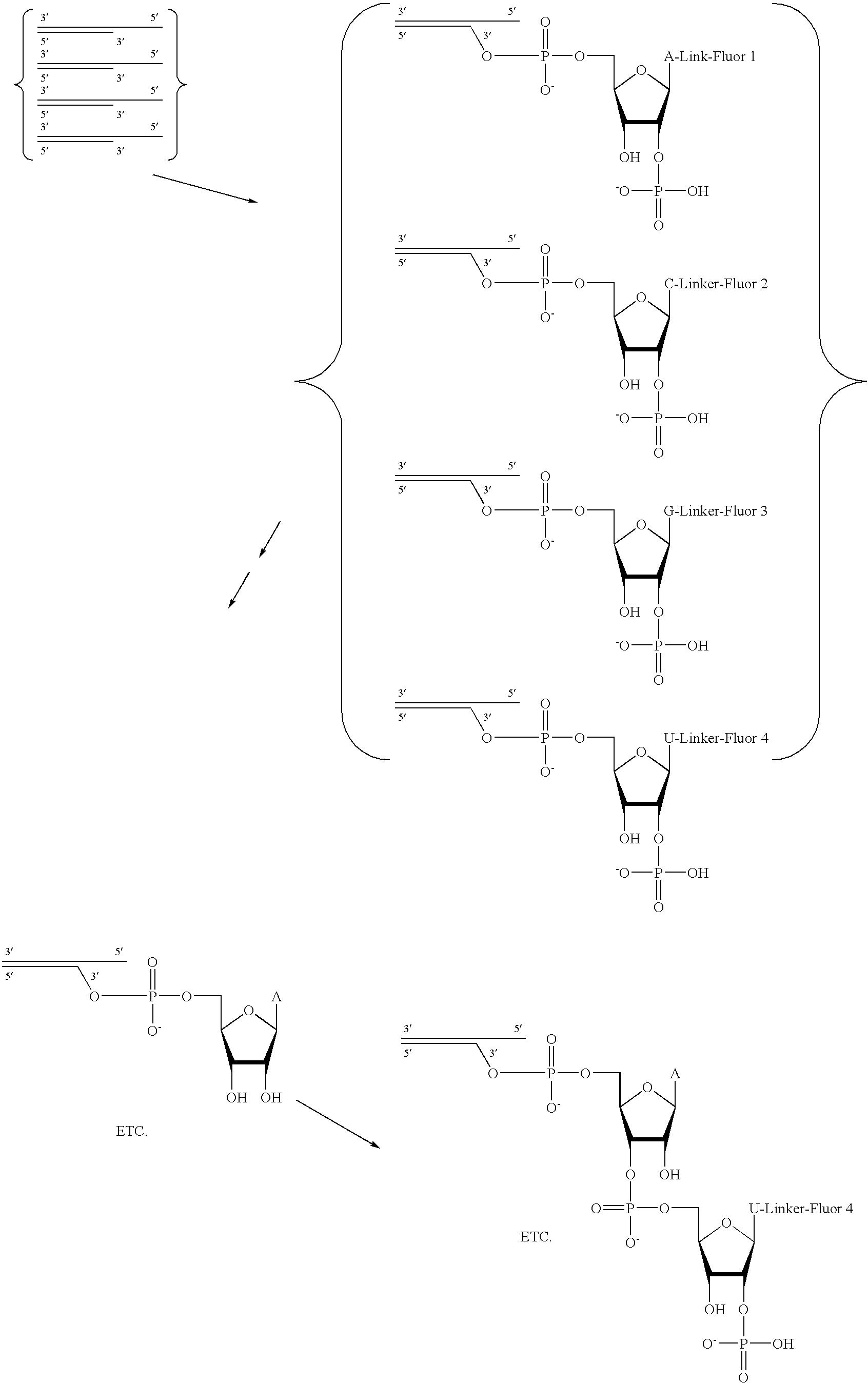 Figure US20080293071A1-20081127-C00008